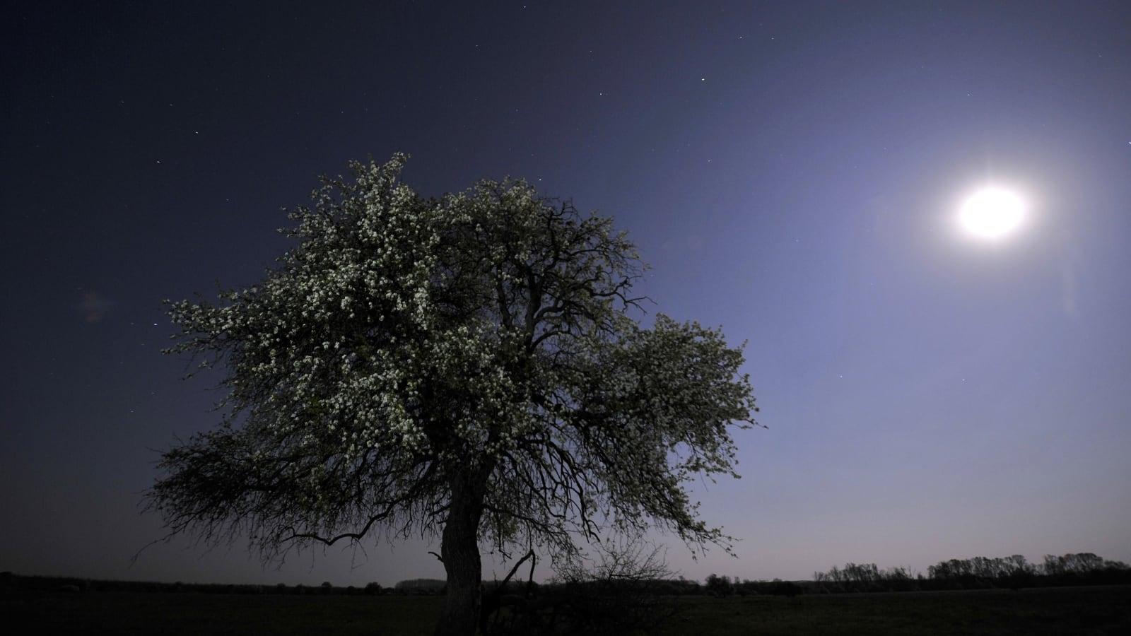 holdfény és látvány)